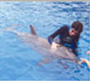 This is the fourth of four thumbnail photos of me swimming with and stroking a dolphin