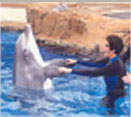 This is the third of four thumbnail photos of me swimming with and stroking a dolphin